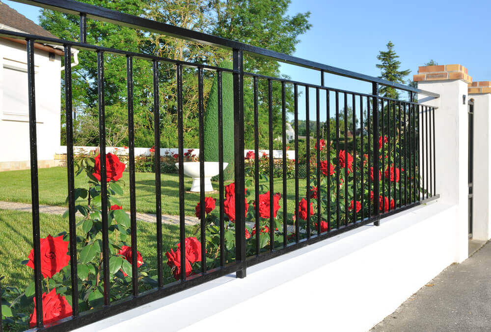 a black steel fencing panels with some nice red roses coming through the bar gaps